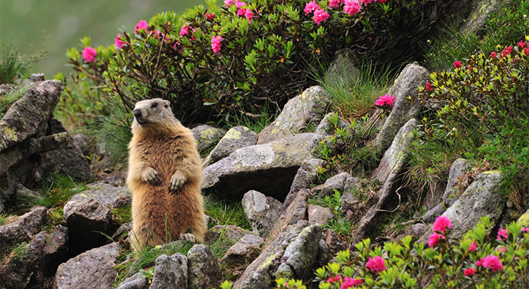 No Matter What the Groundhog Says, Here are 5 Reasons to Sell Before Spring!