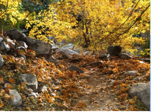 Fall colors in Los Angeles: 12 places to find autumn leaves