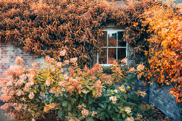 Is fall the new spring for real estate in 2020?